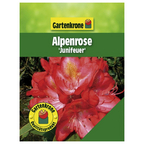 Alpenrose, Rhododendron hybride »Junifeuer«, rosa/pink, Höhe: 30 - 40 cm