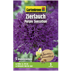 Blumenzwiebel »Gartenkrone Allium Purple Sensation«