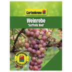 Weinrebe Vitis vinifera »Suffolk Red«