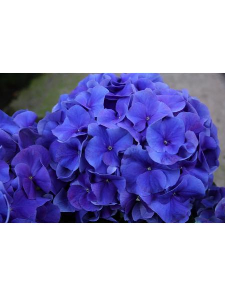 , Topf: 23 cm, Farbe: blau