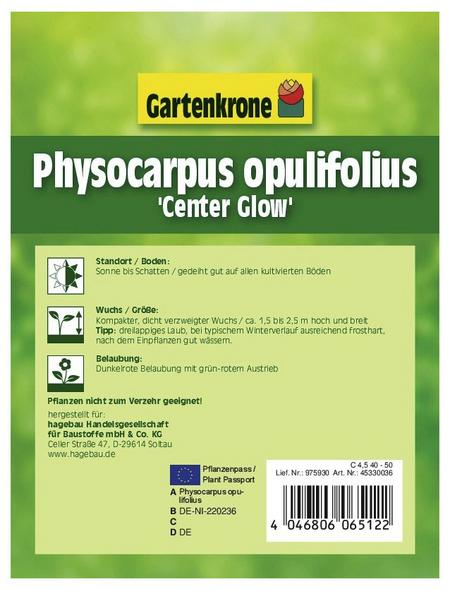 Blasenspiere, Physocarpus Opulifolius »Center Glow-R«, creme, winterhart | Garten > Pflanzen > Pflanzen | GARTENKRONE
