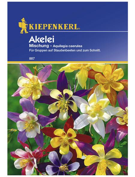 KIEPENKERL Akelei, Aquilegia caerulea, Samen, Blüte: mehrfarbig