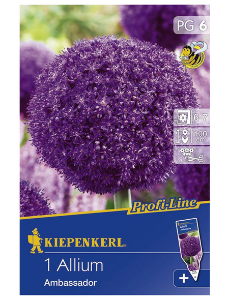 KIEPENKERL Allium Ambassador, Lila, 1 Stück