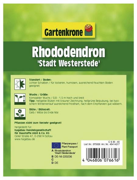 GARTENKRONE Alpenrose, Rhododendron »Westerstede«, gelb, winterhart