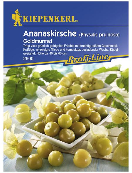 KIEPENKERL Ananaskirsche peruviana Physalis »Goldmurmel«