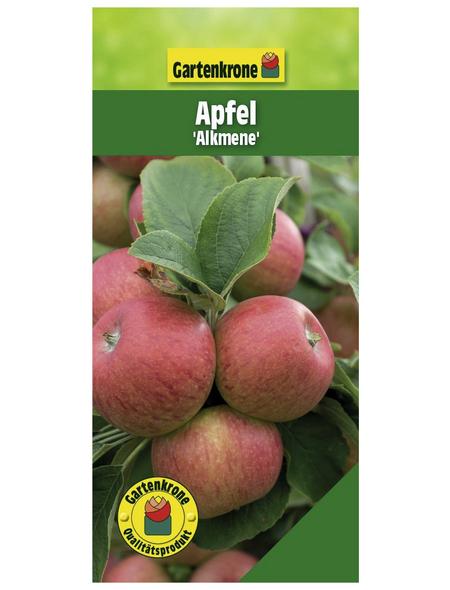 GARTENKRONE Apfel, Malus domestica »Alkmene«, Früchte: sauer, zum Verzehr geeignet