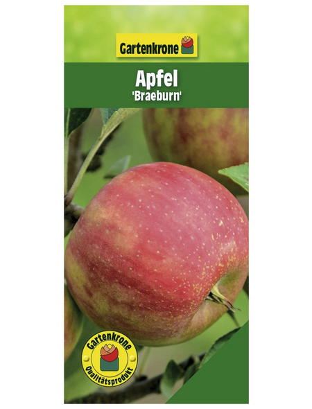 GARTENKRONE Apfel, Malus domestica »Braeburn«, Früchte: süß, zum Verzehr geeignet