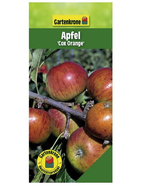 GARTENKRONE Apfel, Malus domestica »Cox Orange«, Früchte: süß-säuerlich, zum Verzehr geeignet