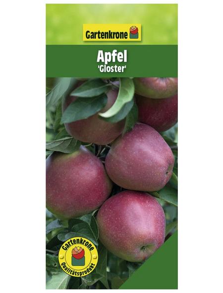 GARTENKRONE Apfel, Malus domestica »Gloster«, Früchte: sauer, zum Verzehr geeignet