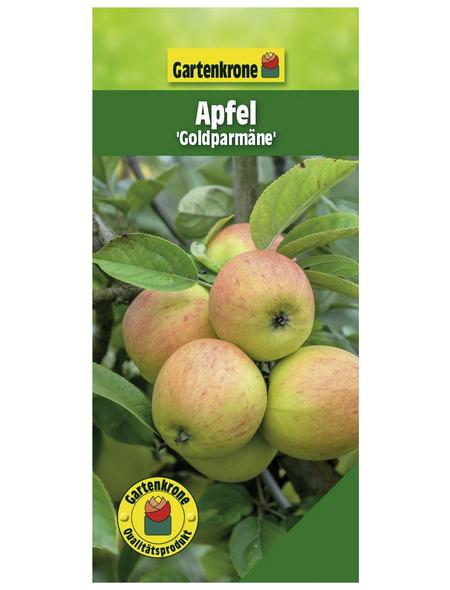 GARTENKRONE Apfel, Malus domestica »Goldparmäne«, Früchte: süß, zum Verzehr geeignet