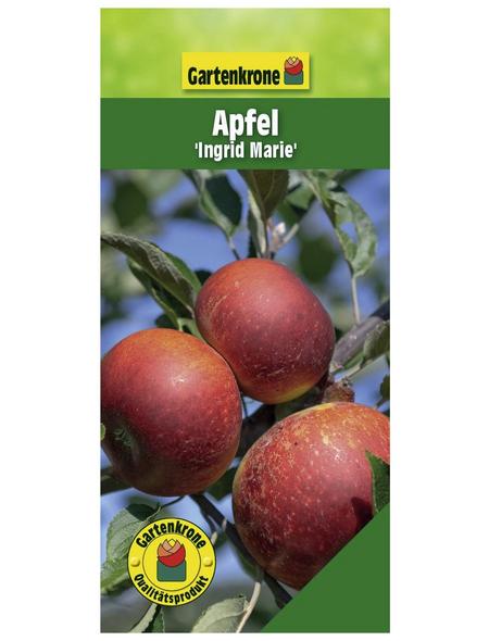 GARTENKRONE Apfel, Malus domestica »Ingrid Marie«, Früchte: süß-säuerlich, zum Verzehr geeignet