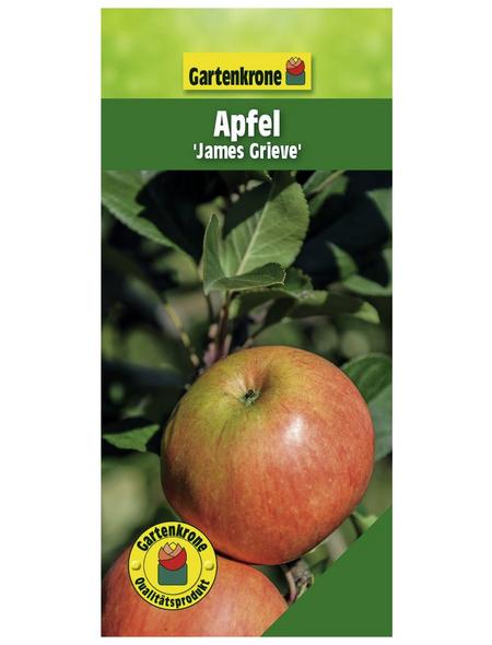 GARTENKRONE Apfel, Malus domestica »James Grieve«, Früchte: süß-säuerlich, zum Verzehr geeignet