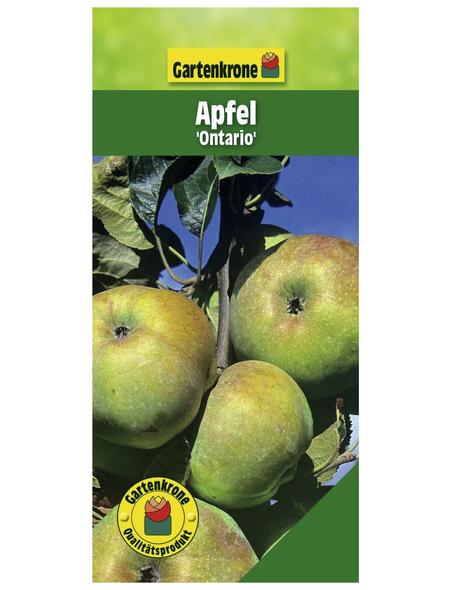 GARTENKRONE Apfel, Malus domestica »Ontario«, Früchte: süß-säuerlich, zum Verzehr geeignet