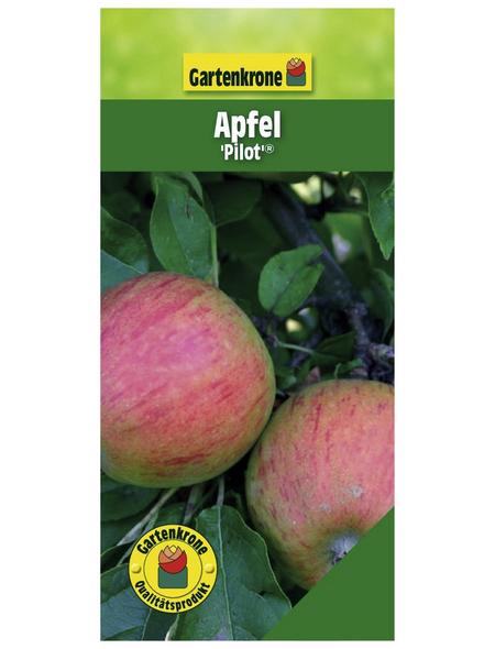 GARTENKRONE Apfel, Malus domestica »Pilot«, Früchte: süß-säuerlich, zum Verzehr geeignet