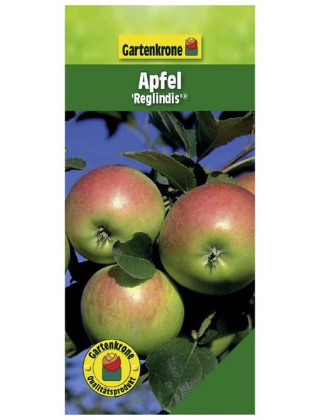 GARTENKRONE Apfel, Malus domestica »Reglindis«, Früchte: süß, zum Verzehr geeignet