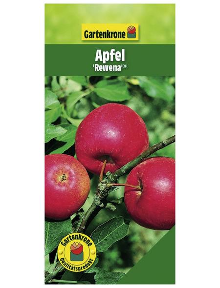 GARTENKRONE Apfel, Malus domestica »Rewena«, Früchte: süß, zum Verzehr geeignet