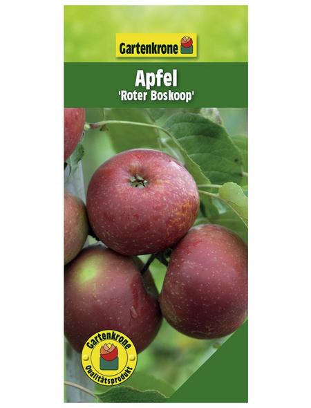 GARTENKRONE Apfel, Malus domestica »Roter Boskoop«, Früchte: sauer, zum Verzehr geeignet