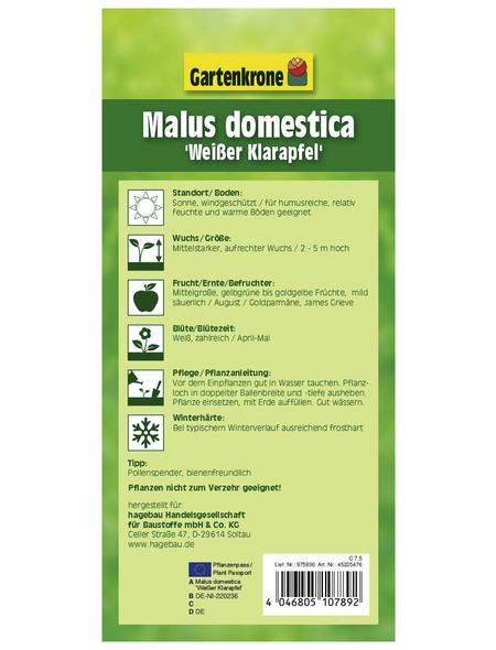 GARTENKRONE Apfel, Malus domestica »Weisser Klarapfel«, Früchte: gelb, süß-säuerlich
