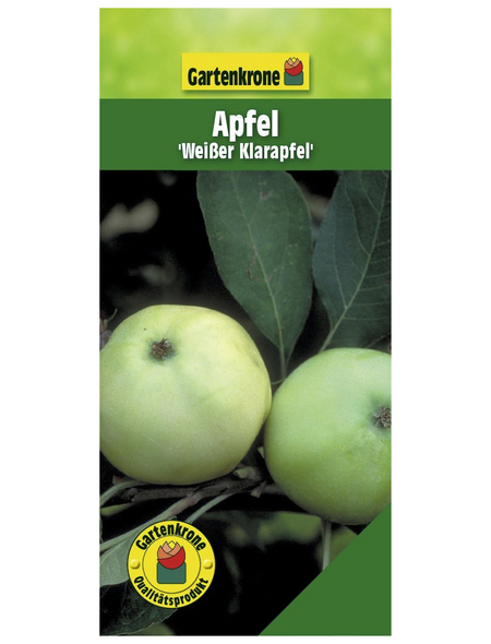 GARTENKRONE Apfel, Malus domestica »Weisser Klarapfel«, Früchte: süß-säuerlich, zum Verzehr geeignet