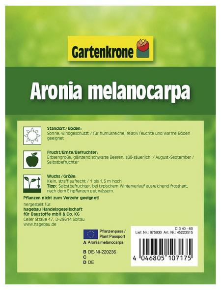 GARTENKRONE Apfelbeere, Aronia melanocarpa, Früchte: schwarz, essbar