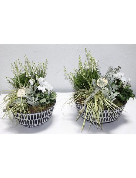 GARTENKRONE Arrangement, Betonschale weiss/schwarz, herbstlich bepflanzt, Durchmesser: 25 cm