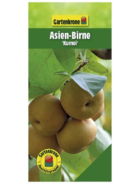 GARTENKRONE Asien-Birne, Pyrus pyrifolia »Nashi Kumoi«, Früchte: süß, zum Verzehr geeignet