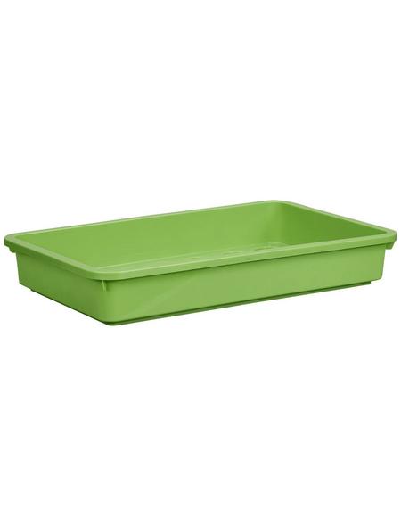 WINDHAGER Aussaatschale, BxH: 24 x 6 cm, grün