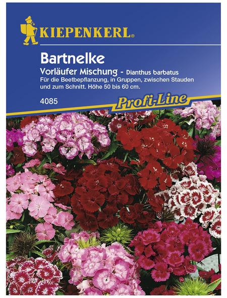 KIEPENKERL Bartnelke, Dianthus barbatus, Samen, Blüte: mehrfarbig