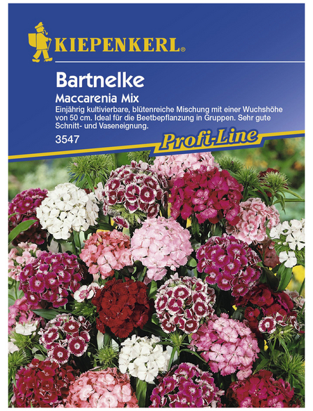 KIEPENKERL Bartnelke, Valerianella locusta, Samen, Blüte: mehrfarbig