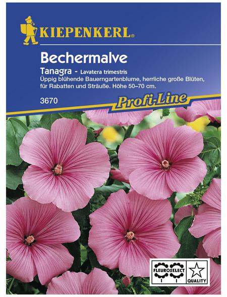 KIEPENKERL Bechermalve, Lavatera trimestris, Samen, Blüte: rosa