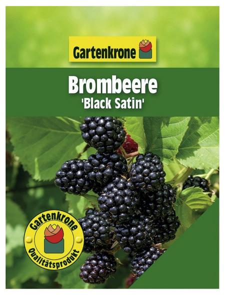 GARTENKRONE Beerenstrauch »Brombeere«, Creme