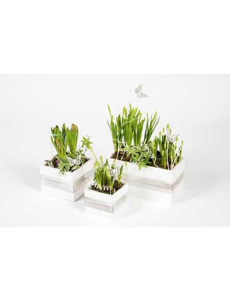 Bepflanztes Arrangement, Holzwürfel mit Frühlingsblühern
