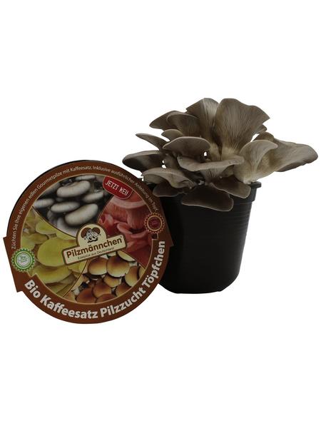 Bio Kaffeesatz Töpfchen Austernpilz, Nutzung im Haus