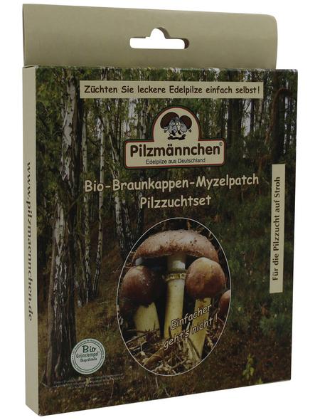 Bio Myzelpatch Pilzzuchtset Braunkappe, für den Garten