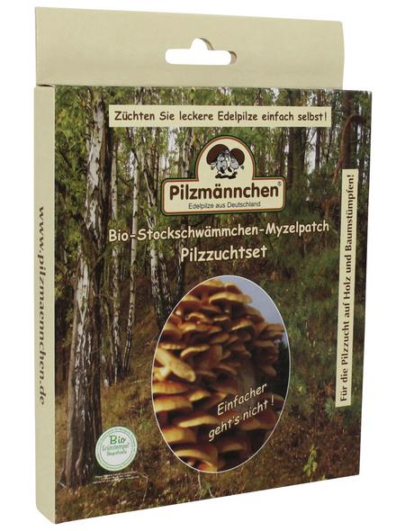 Bio Myzelpatch Pilzzuchtset Stockschwämmchen, für den Garten