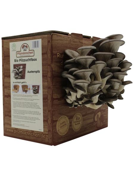 Bio Pilzzuchtbox Austernpilz, Nutzung im Haus