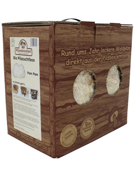 Bio Pilzzuchtbox Pom Pom, Nutzung im Haus