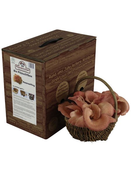 Bio Pilzzuchtbox Rosenseitling, Nutzung im Haus