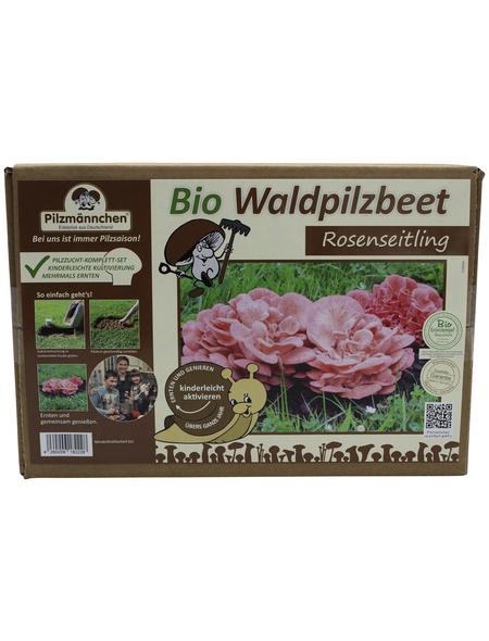 PILZMÄNNCHEN Bio Waldpilzbeet Rosenseitling, für den Garten