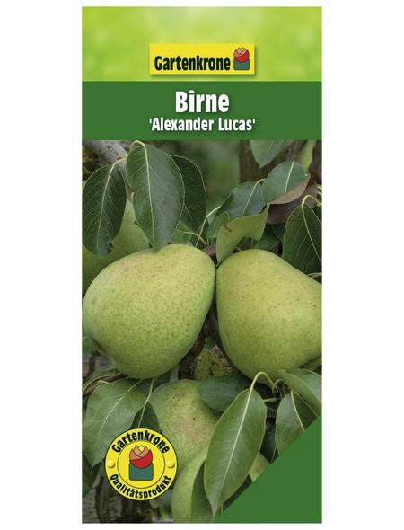 GARTENKRONE Birne, Pyrus communis »Alexander Lucas«, Früchte: süß, zum Verzehr geeignet