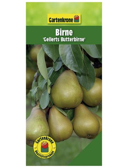GARTENKRONE Birne, Pyrus communis »Gellerts Butterbirne«, Früchte: süß, zum Verzehr geeignet
