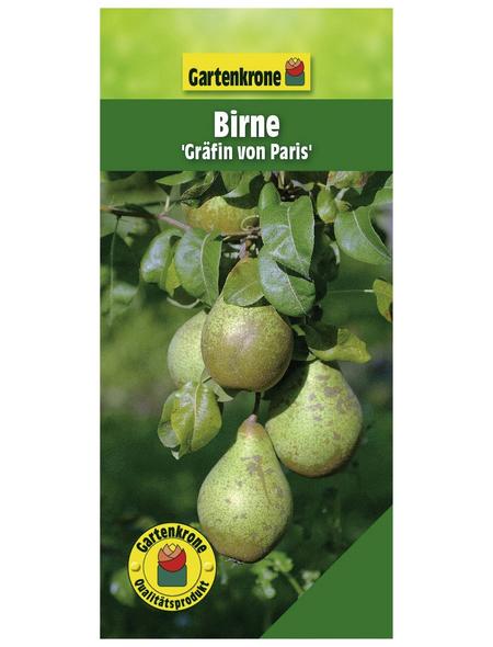 GARTENKRONE Birne, Pyrus communis »Gräfin von Paris«, Früchte: süß, zum Verzehr geeignet