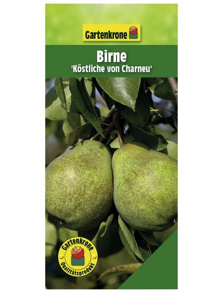 GARTENKRONE Birne, Pyrus communis »Köstliche von Charneu«, Früchte: süß, zum Verzehr geeignet