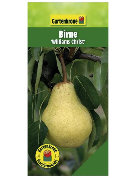 GARTENKRONE Birne, Pyrus communis »Williams Christ«, Früchte: süß, zum Verzehr geeignet