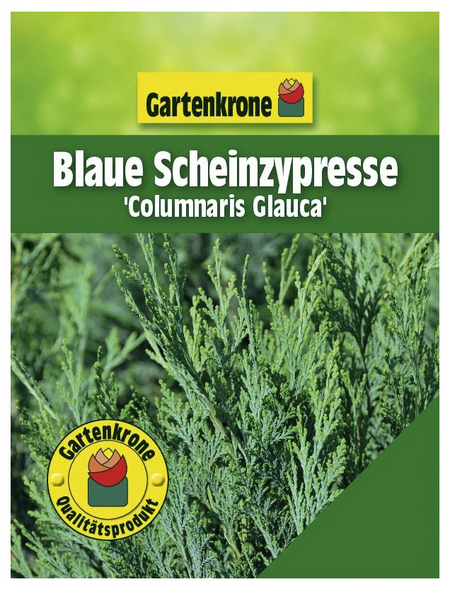 GARTENKRONE Blaue Scheinzypresse, Chamaecyparis lawsoniana »Columnaris Glauca«, winterhart