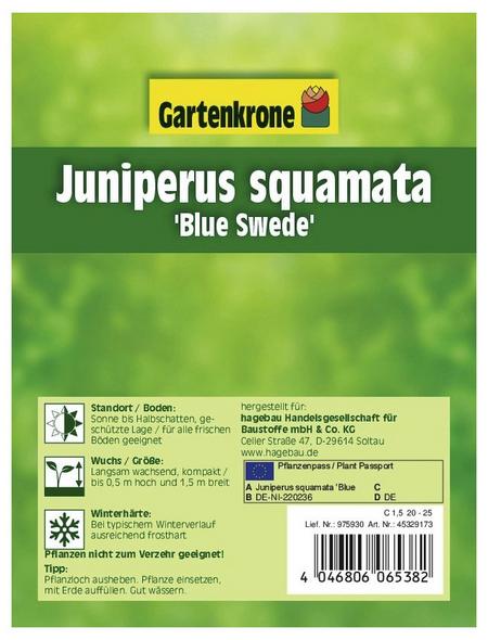 GARTENKRONE Blauer Zwergwacholder, Juniperus squamata »Blue Swede«, winterhart