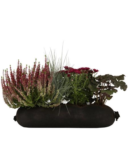 BLUMIXX Blumen-Bag Heide, max. Wuchshöhe: 30 cm, Blüte: bunt