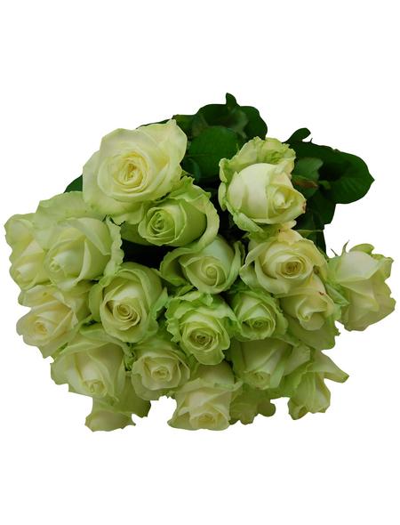 Blumenstrauß mit Rosen   in weiß, Ø 36–40 cm