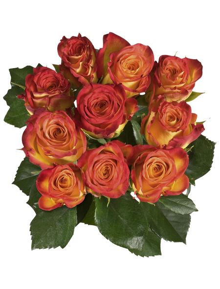 Blumenstrauß »Rose «, Ø 33 cm