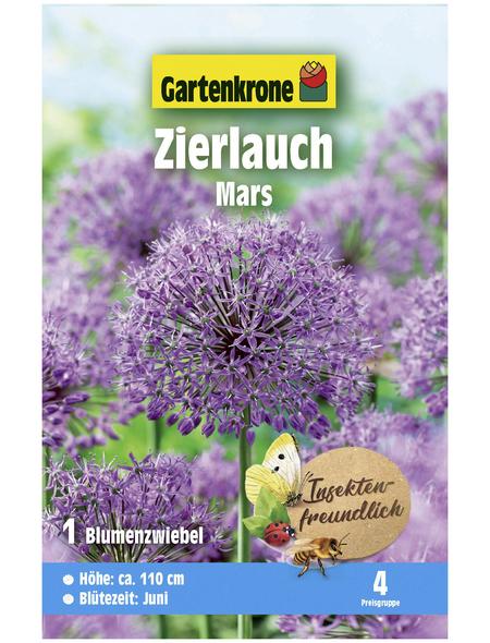 GARTENKRONE Blumenzwiebel »Gartenkrone Allium Mars«